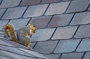 Whether it is a squirrel or a chimney swift, you want to keep your chimney free of obstructions.