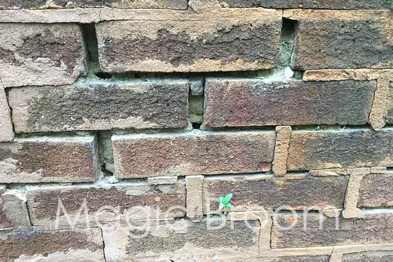 mortar joint damage and vegetation growth